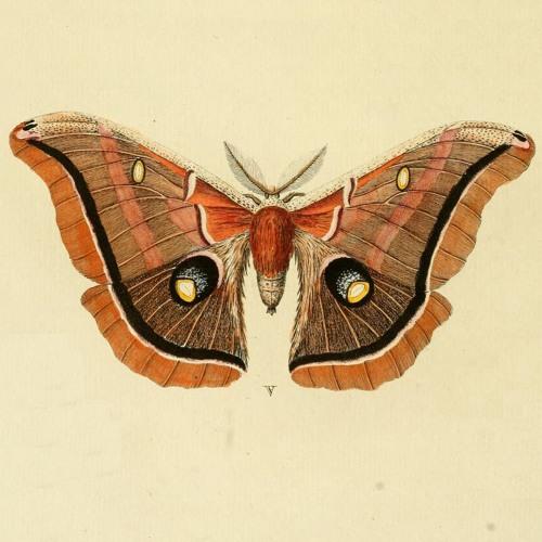 Vesper Moth's avatar