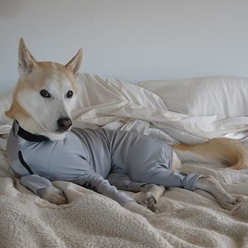 COP'S DOG's avatar