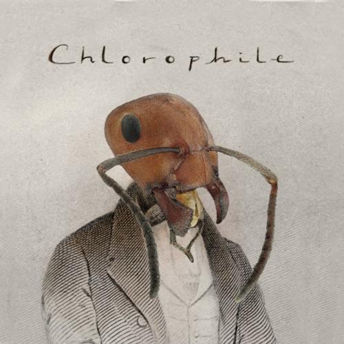 Chlorophile's avatar