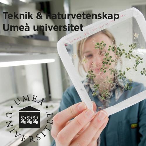 Teknat Umeå universitet's avatar