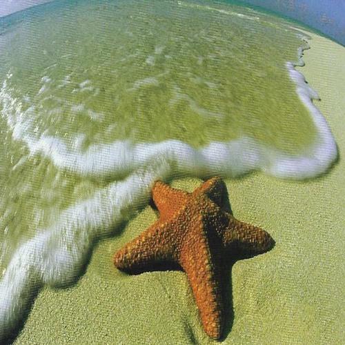 Starfishoz's avatar