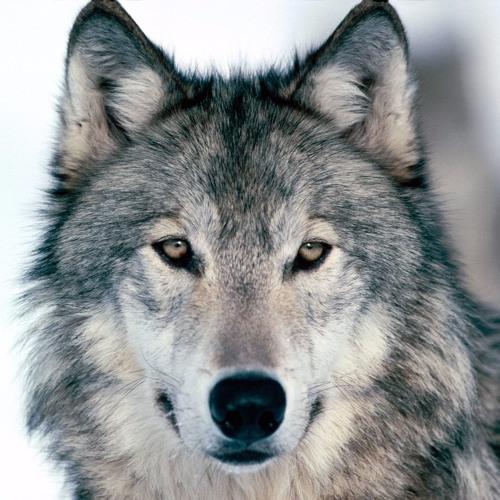 prod. Wolfy's avatar