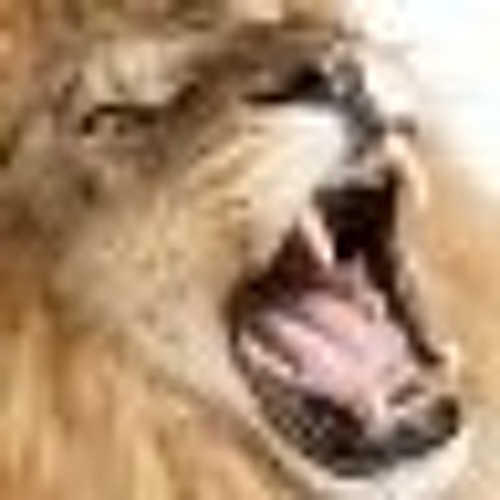 YZF's avatar