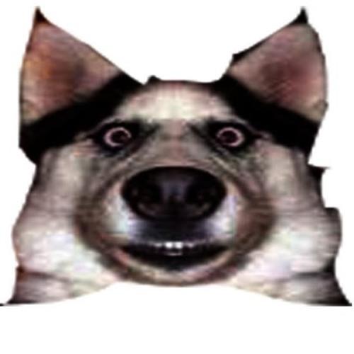 benja- pv's avatar