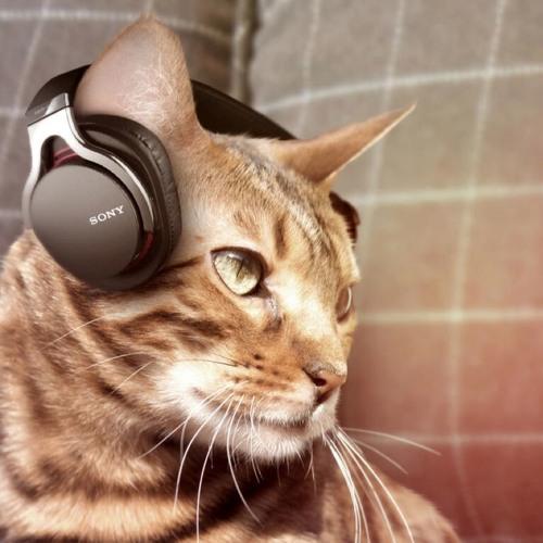 golden130's avatar