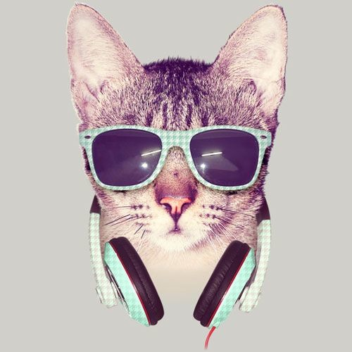 Lost Cat & Reward's avatar