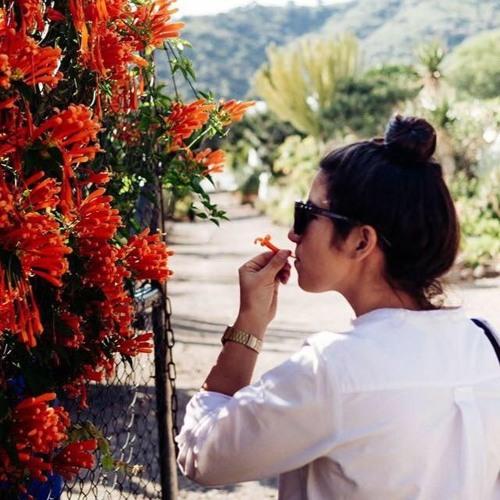 Sofia Solamente's avatar