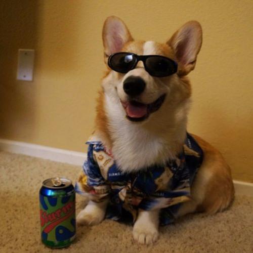 Dope-Cody's avatar