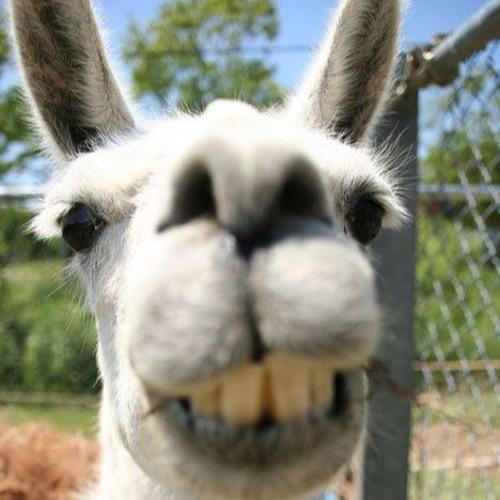 Dipsy llama's avatar