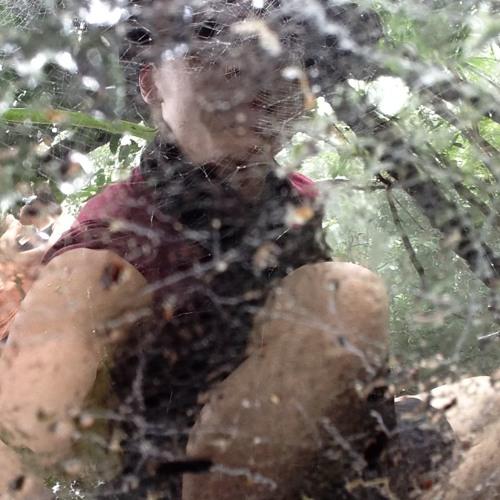 Treefort Ends's avatar
