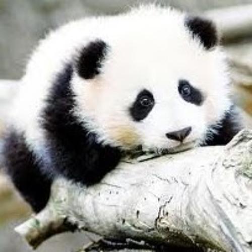 Tactical Panda's avatar