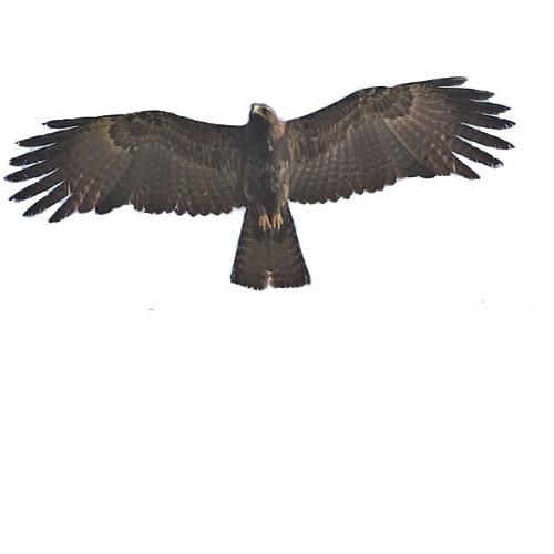 Spread Eagle Sound System's avatar