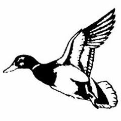 Duckfasse Sound