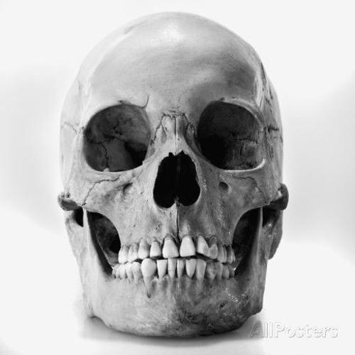 Doc Skull's avatar