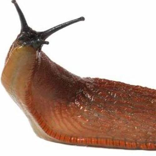 Rýchlosť datovania Guildford Slug šalát