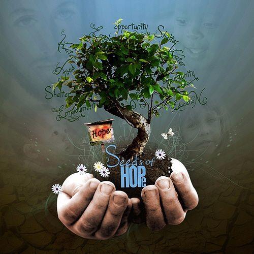 Seeds of Hope's avatar