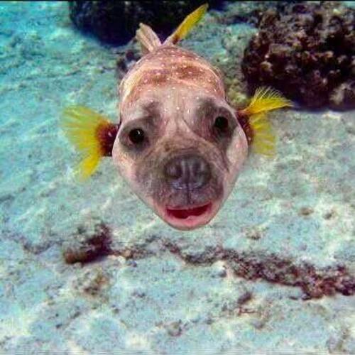 Fishpuppy's avatar