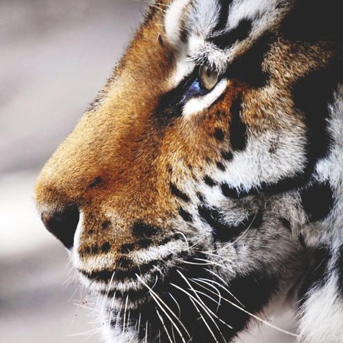 SARGAM.'s avatar