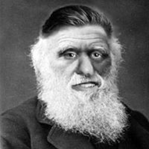 Jules Darwin's avatar
