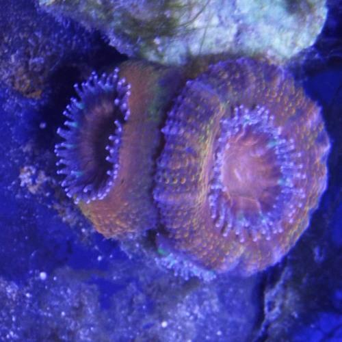 Williams Reef's avatar