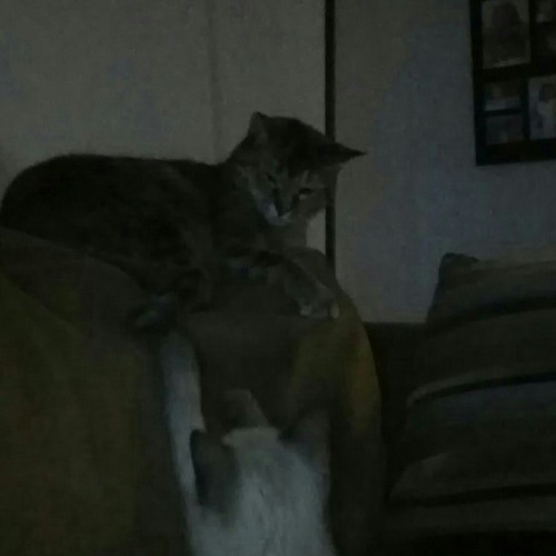 Kittycat505's avatar