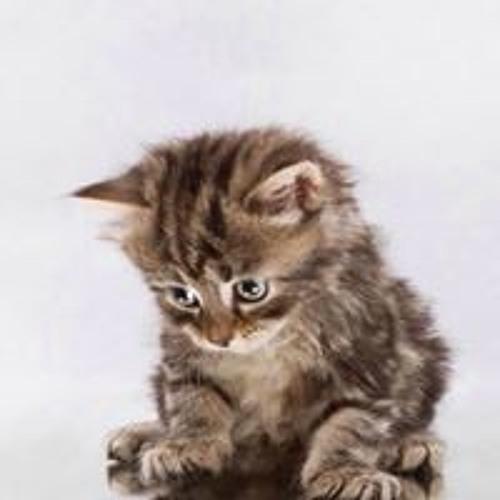 cat claw scratch