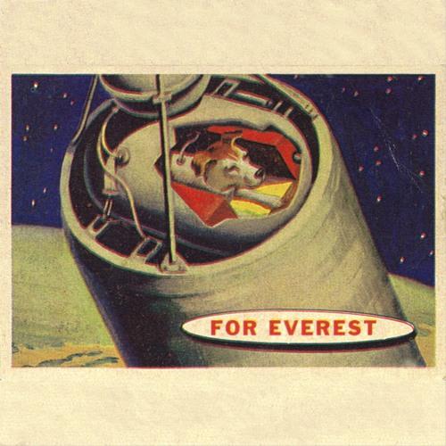 For Everest's avatar