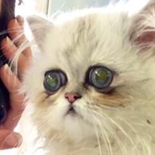 Stefanie Cutler's avatar