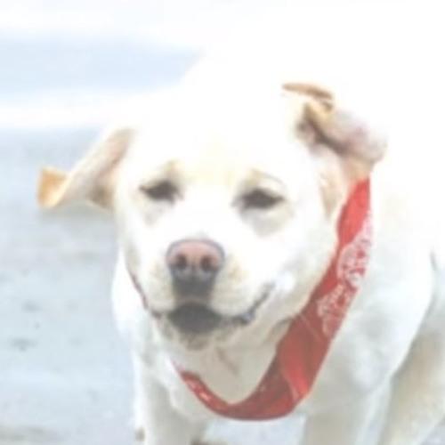 Carprofen For Dogs's avatar