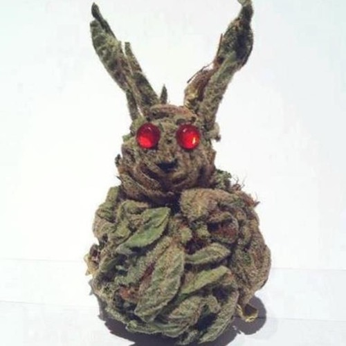 Yo No Soy Un Conejo's avatar