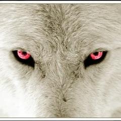 J.Wolf