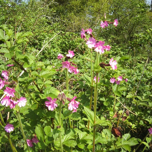 Dandelion Clocks and Tumbleweed