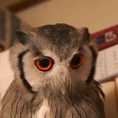 OwlProg's avatar