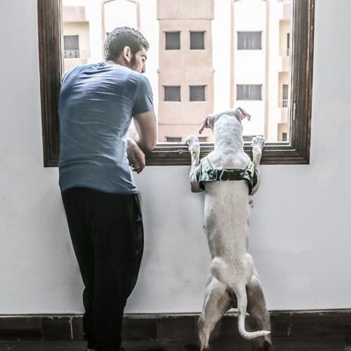 Ahmed Mohsen 481's avatar