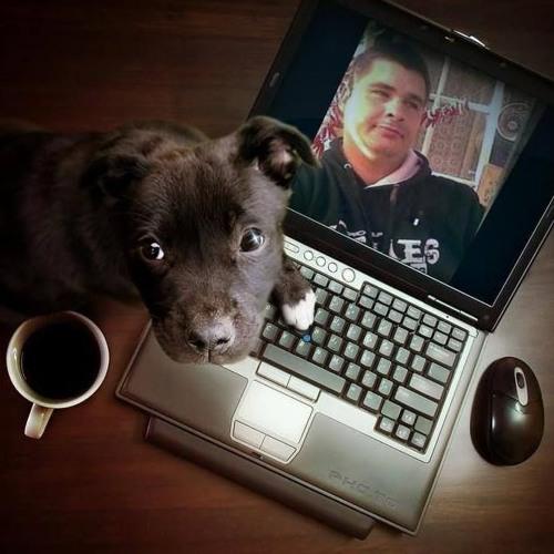Joey Summer Tiger (JOEY)'s avatar
