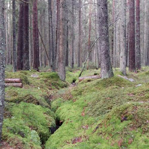 Skogspodden's avatar