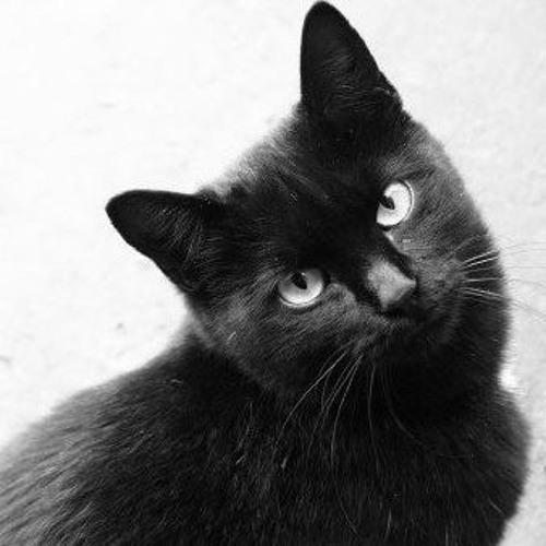 El gato Repost's avatar