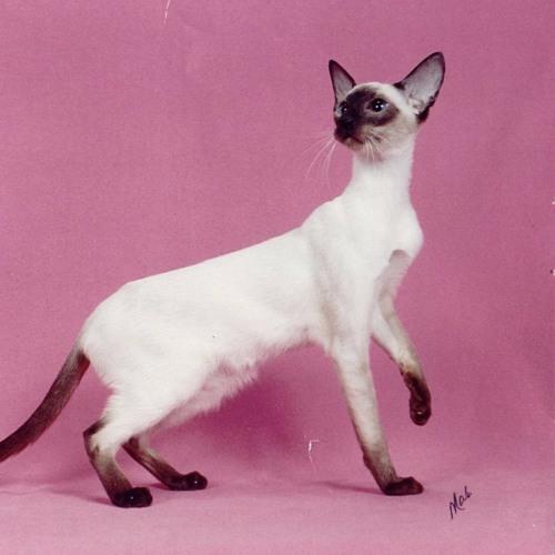 collectingcats's avatar
