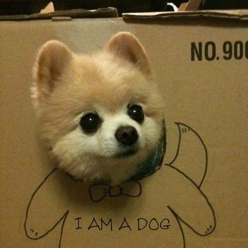 Heidegger's DOG's avatar