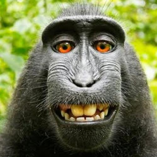 Jay Koria's avatar