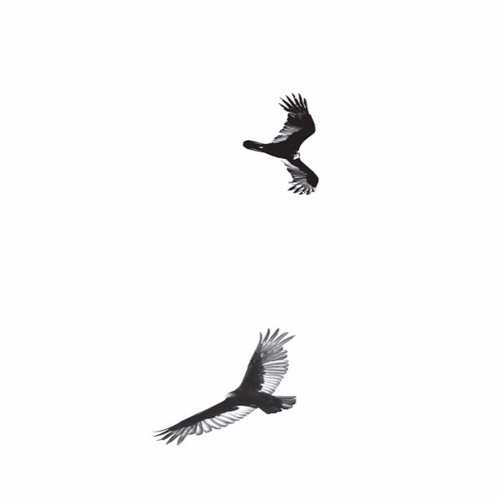 Circling Vultures's avatar