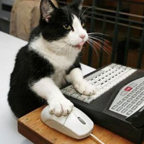 An Actual Cat's avatar