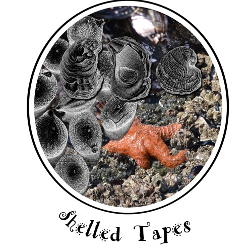 Shelled Tapes's avatar