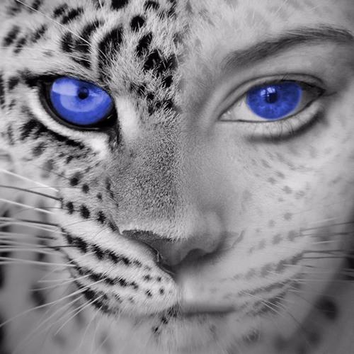 Nadine Niemeier's avatar