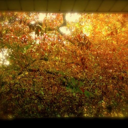 drumpelstiltskin's avatar