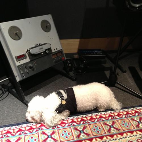 Lorenz Recordings's avatar