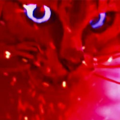 catɀ biɀcuitɀ's avatar