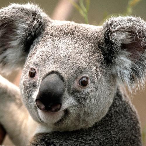 McShave's avatar