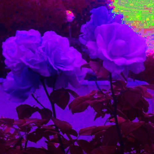 PURPLE ROSES's avatar