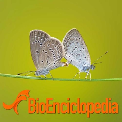 Resultado de imagen de bioenciclopedia